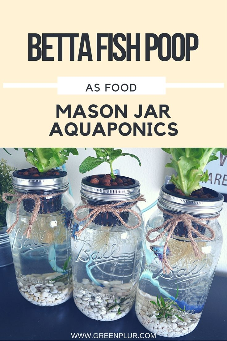3 mason jar aquaponics kit build your own hydroponics herb garden aquaponics indoor herb garden greenplur using fish waste as plant fertilizer is known as aquaponics no soil is needed because workwithnaturefo