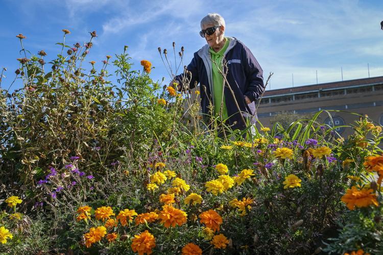 University Of Illinois Extension Master Gardener Program