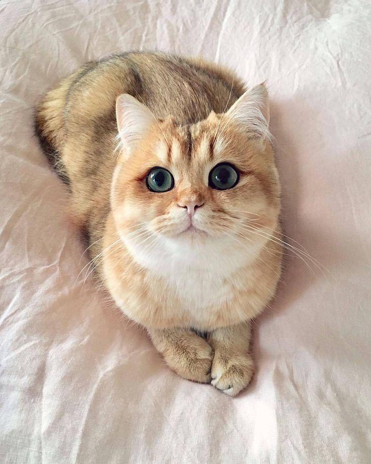 Pumpkin The Purr Machine Via Catloversclub Instagram Cute Cats
