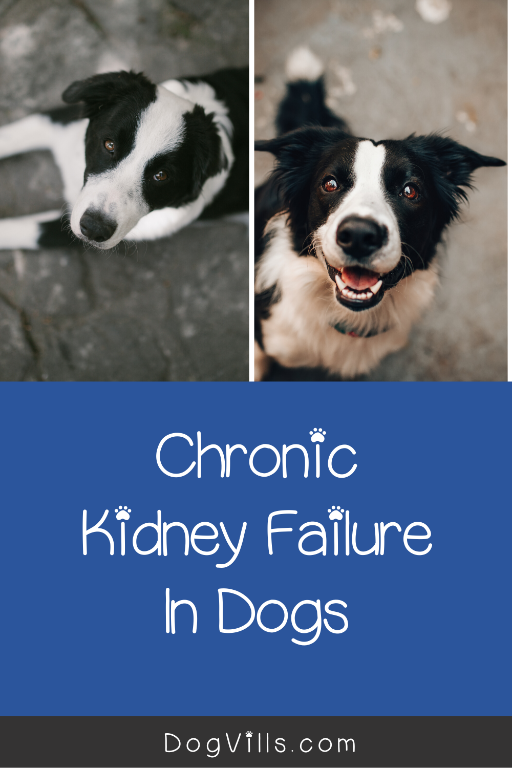 Dealing With Chronic Kidney Failure In Dogs How To Keep Them Comfortable Chronic Kidney Failure Dogs Dog Behavior Training