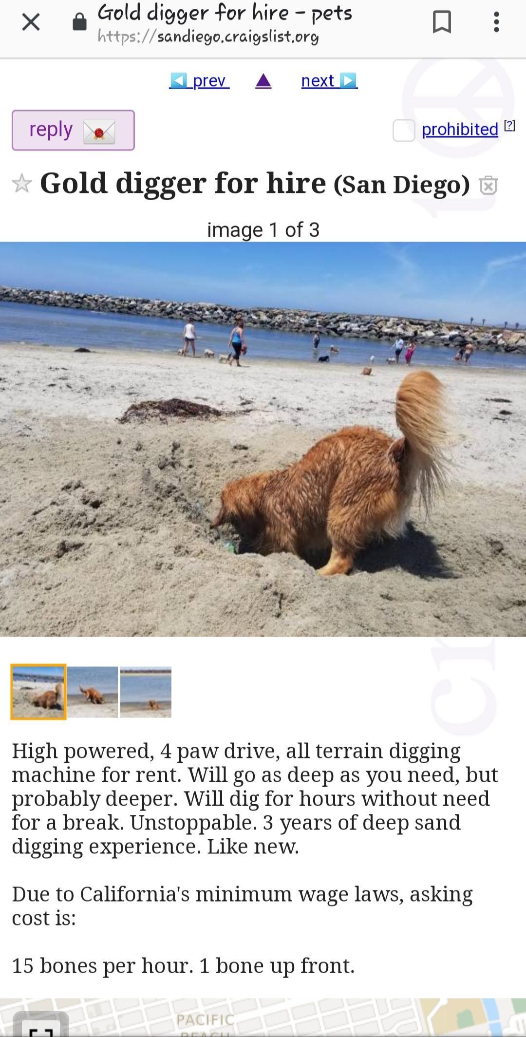 Craigslist San Diego Ca Pets - DECRAIGS