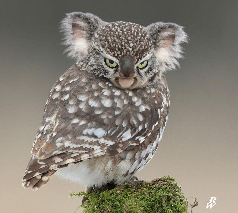 200+ Best Photoshop Hybrids images   photoshopped animals, animal mashups,  photoshop
