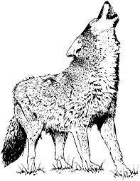 Wolf Drawing Baby Google Suche Malvorlagen Ausmalen Ausmalbilder