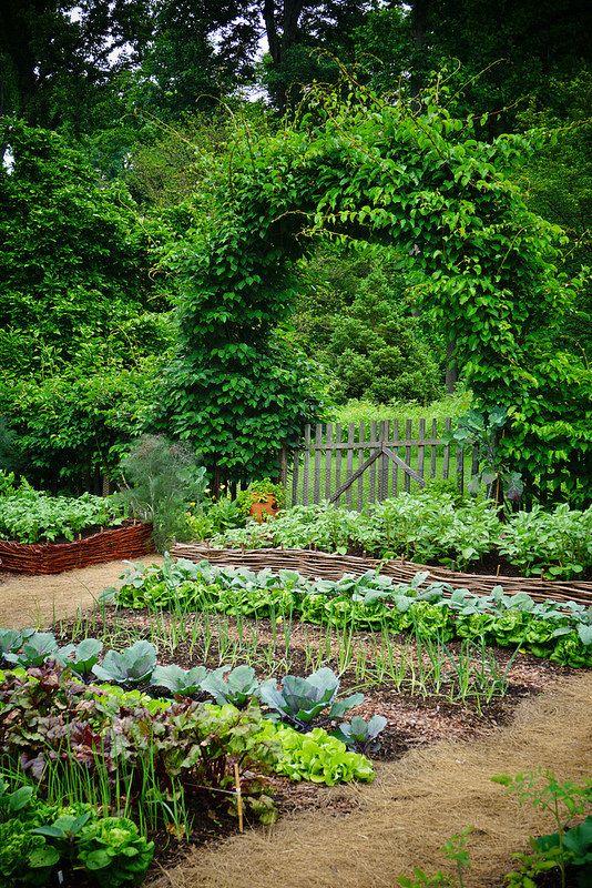 Vegetable Garden (1)   by KarlGercens com GARDEN LECTURES is part of Vegetable garden -
