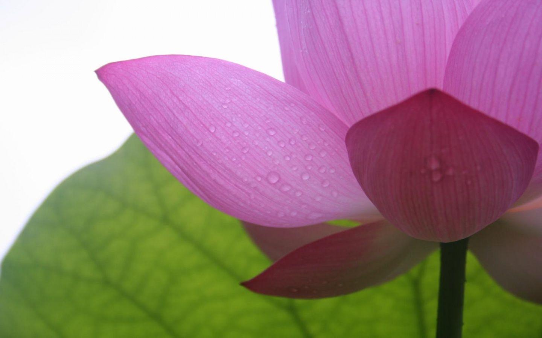 Desktop Wallpaper Flower Flora Pink Desktopwallpaper Photo