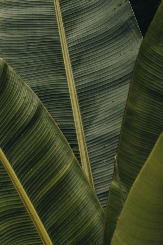 DESIGN./ VISUAL. Banana Leaves Photography Design