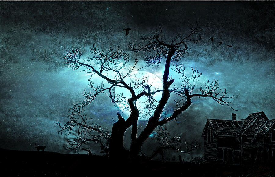 Night sky behind tree