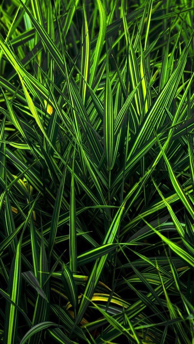 Green grass iPhone 5s Wallpaper Desktop wallpaper