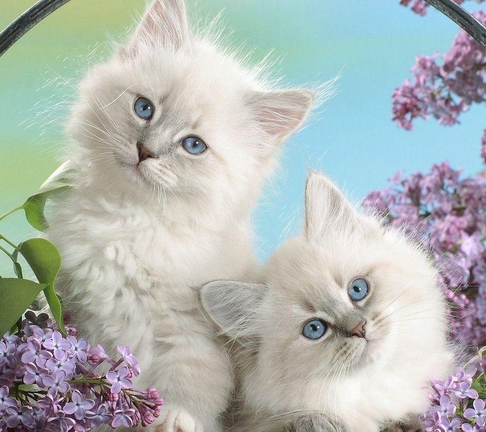 правило, картинки на телефон движущиеся животные кошки выбор