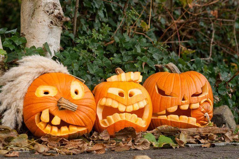 Halloween-Kürbis schnitzen: Anleitung und Vorlagen - WOMZ