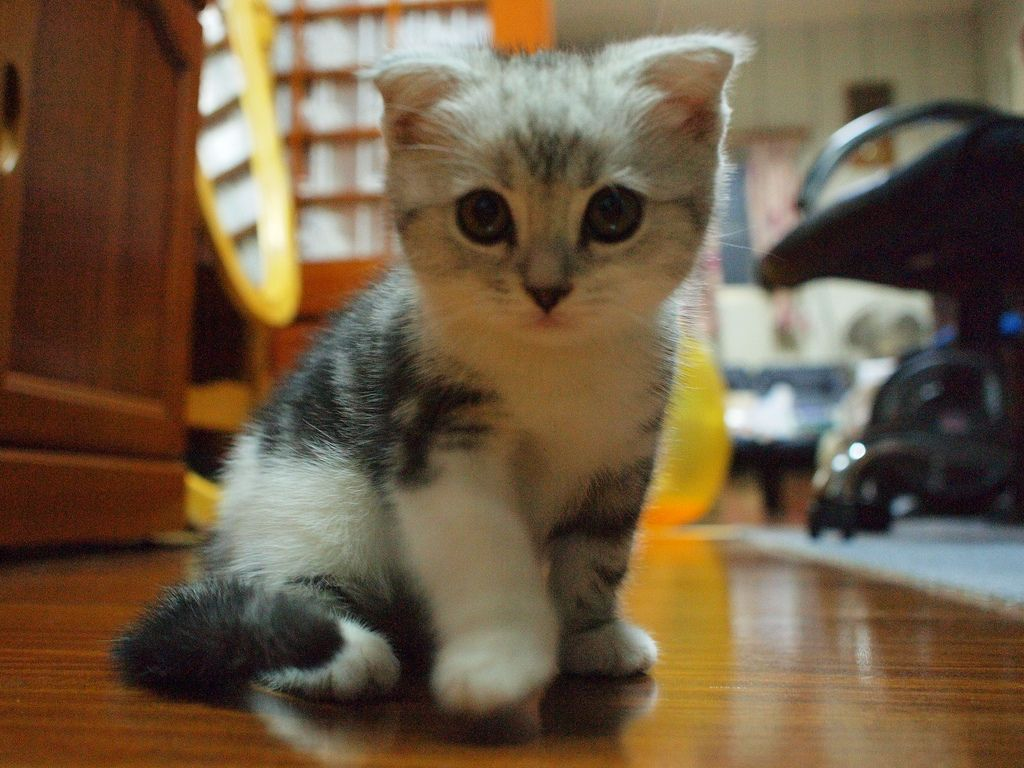 Top 3 most adorable and cutest cat Breeds Cats Breeds