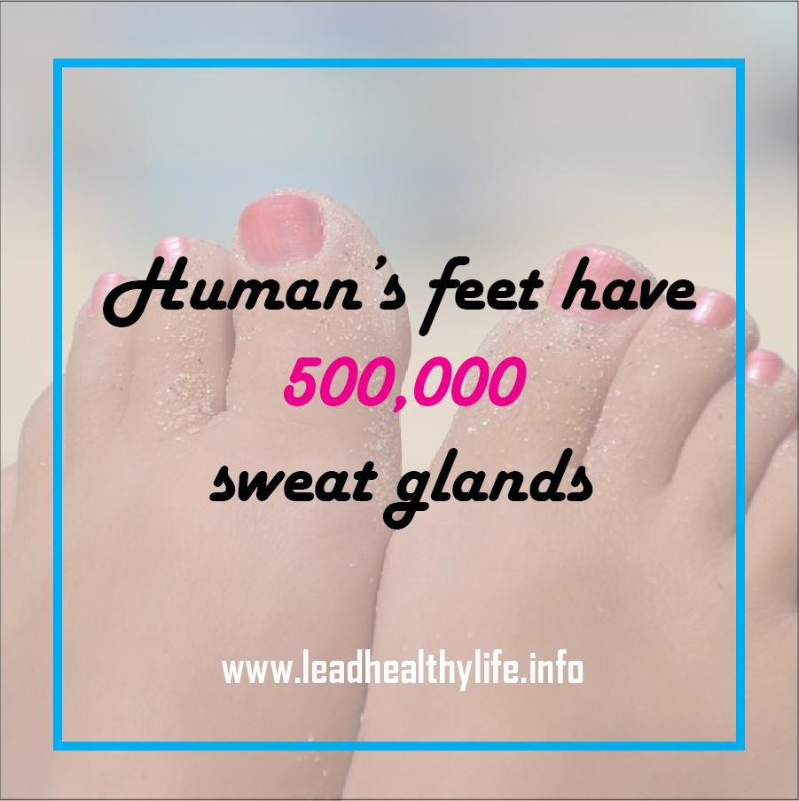 medium resolution of human s feet have 500 000 sweat glands