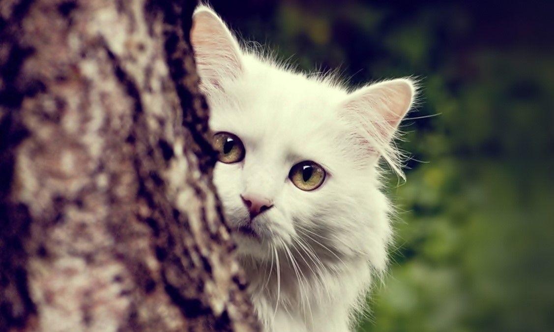 Epingle Par Natalie Lyon Sur Cats Photo Chat Photographie De