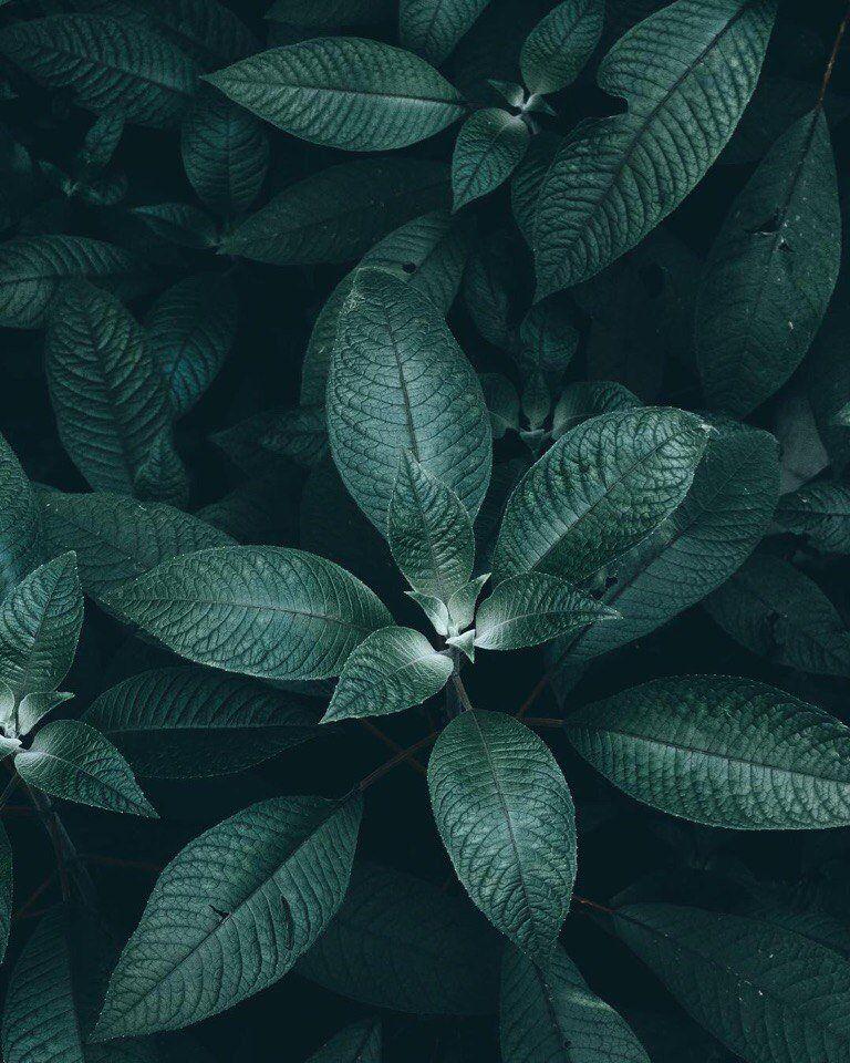 картинки серо-зеленых цветов пекине проходит