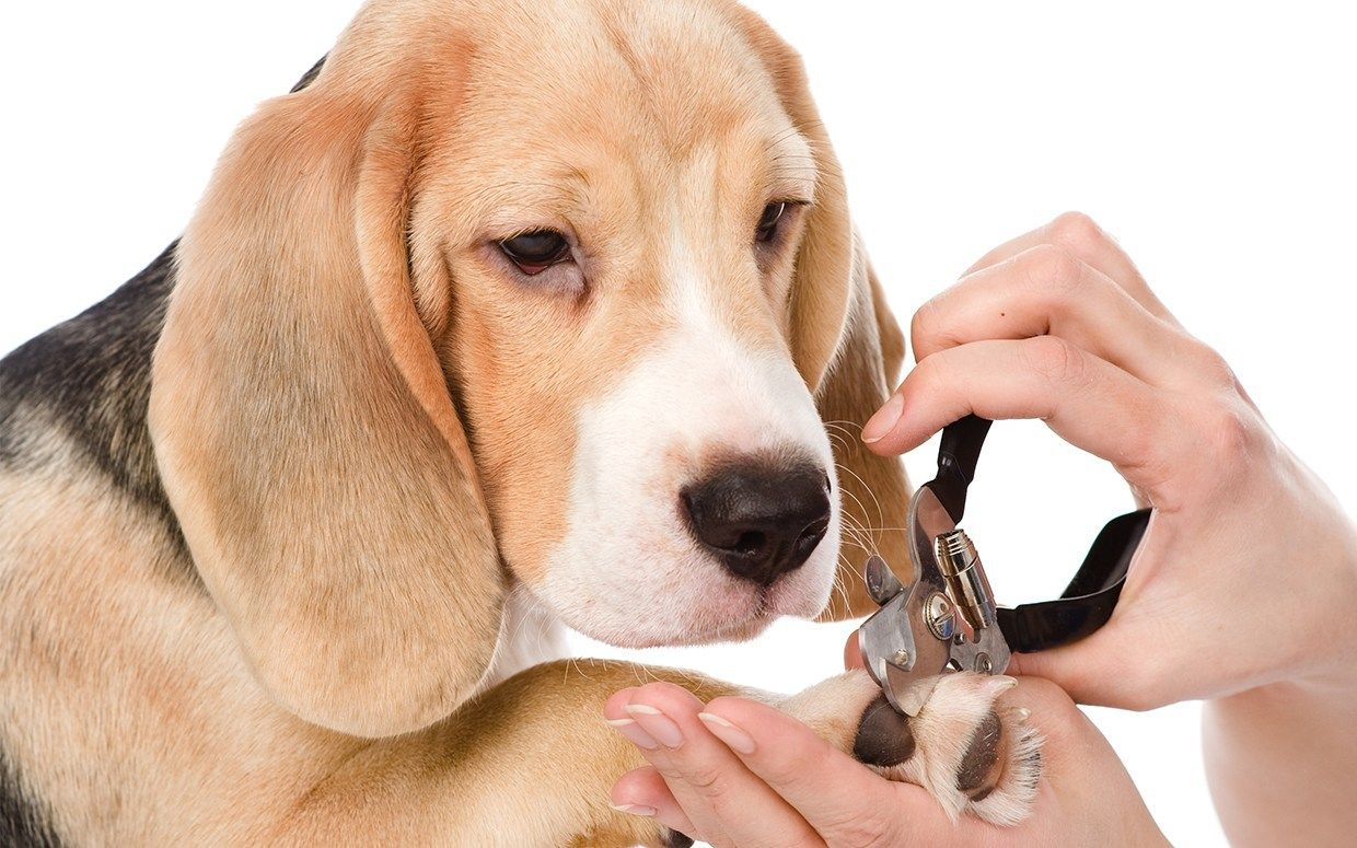The StressFree Ways To Trim Your Dog's Nails Video