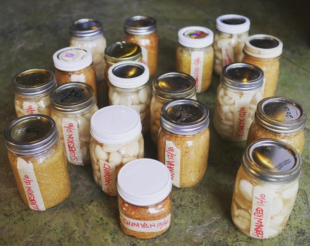 Fermented Garlic Paste Recipe Fermentation, Fermented
