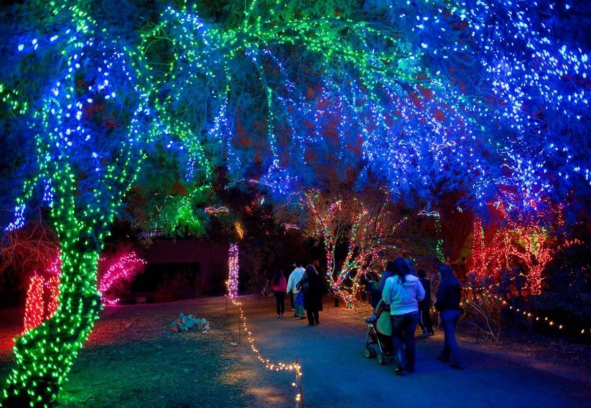 Colorful Phoenix Arizona Zoo Lights At The Phoenix Zoo