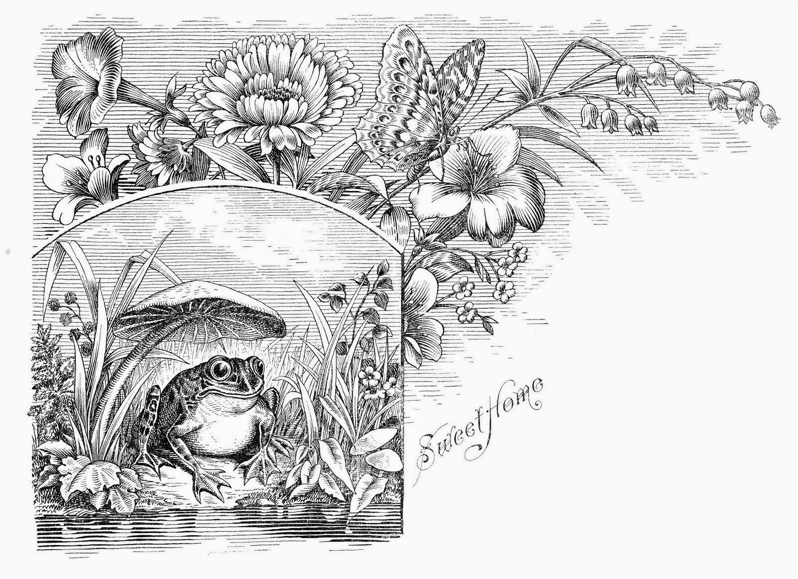 coloring pages for adults frogs - google search | colouring pages ... - Love Coloring Pages Teenagers