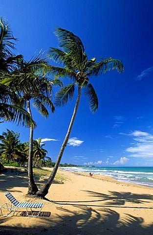 Beach With Palm Trees Coco Near Rio Grande Puerto Rico Caribbean