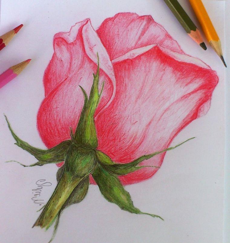 Matite Colorate Disegno Rosa Stilizata Petali Di Colore Rosa Stelo Fiore Verde Disegni Di Rose Disegno Di Fiori Disegno Fiori