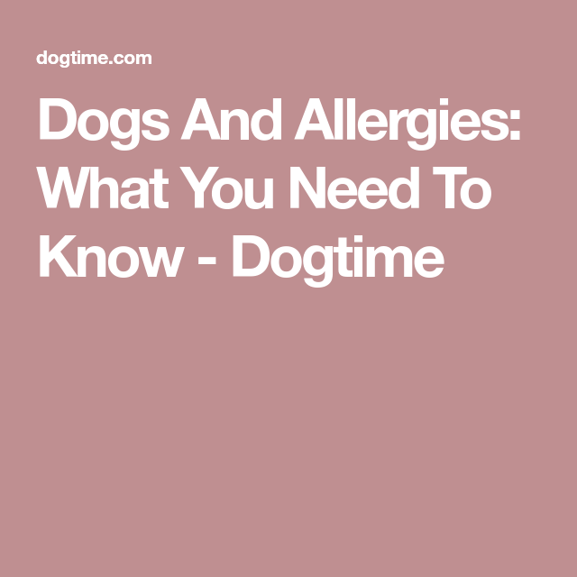 Dogs And Allergies: What You Need To Know
