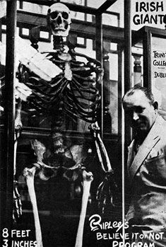 "Robert Ripley traveled the world to collect exotic artifacts. Here he poses with the skeleton of now deceased World's Tallest Man. 8'3"" THE IRISH GIANT.