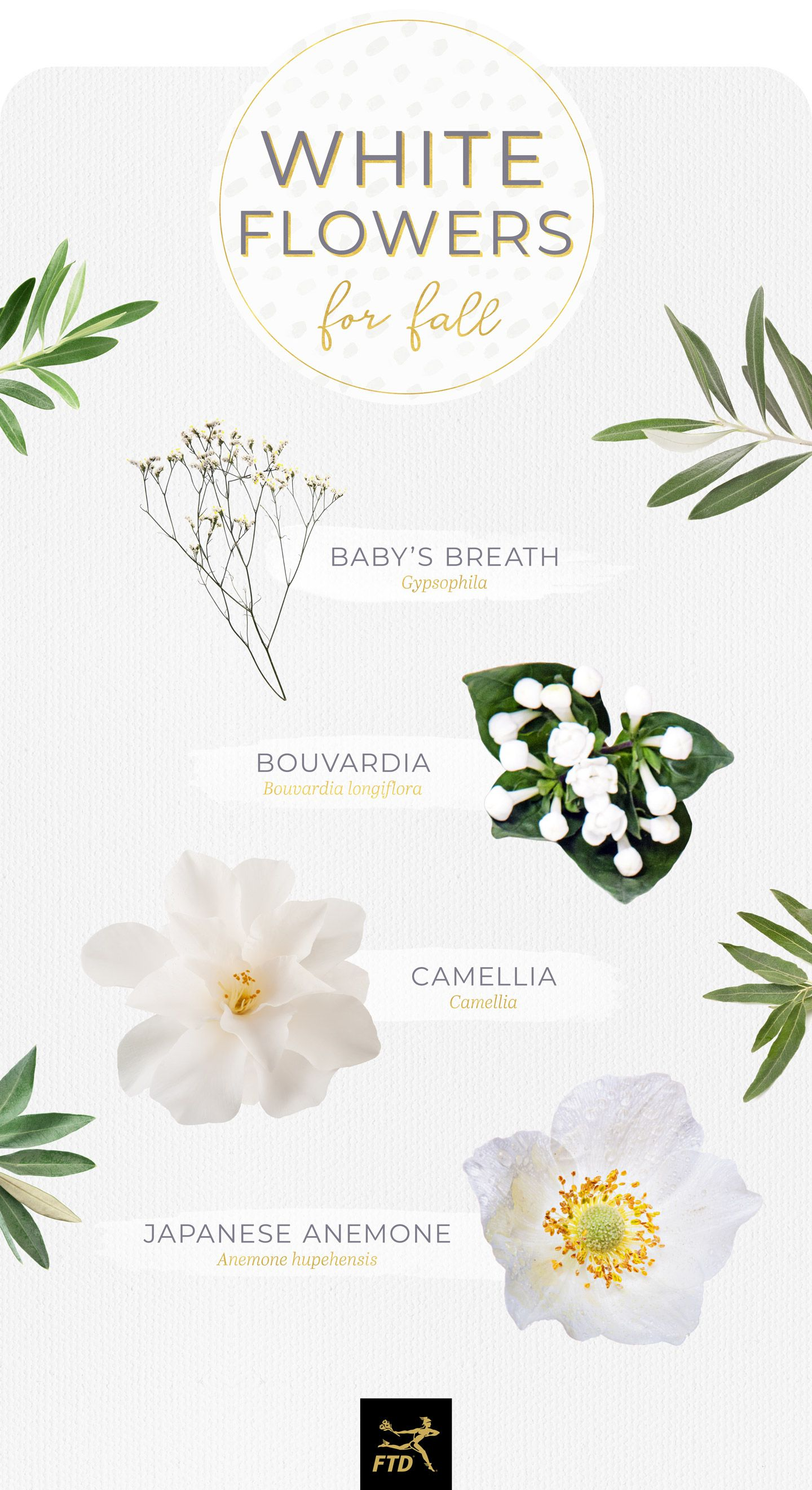 40 Types Of White Flowers Pinterest White Flowers And Wedding