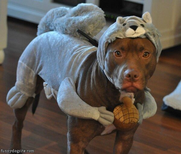 lol    Love this | Love-A-Bulls <3 | Funny animals, Funny dogs