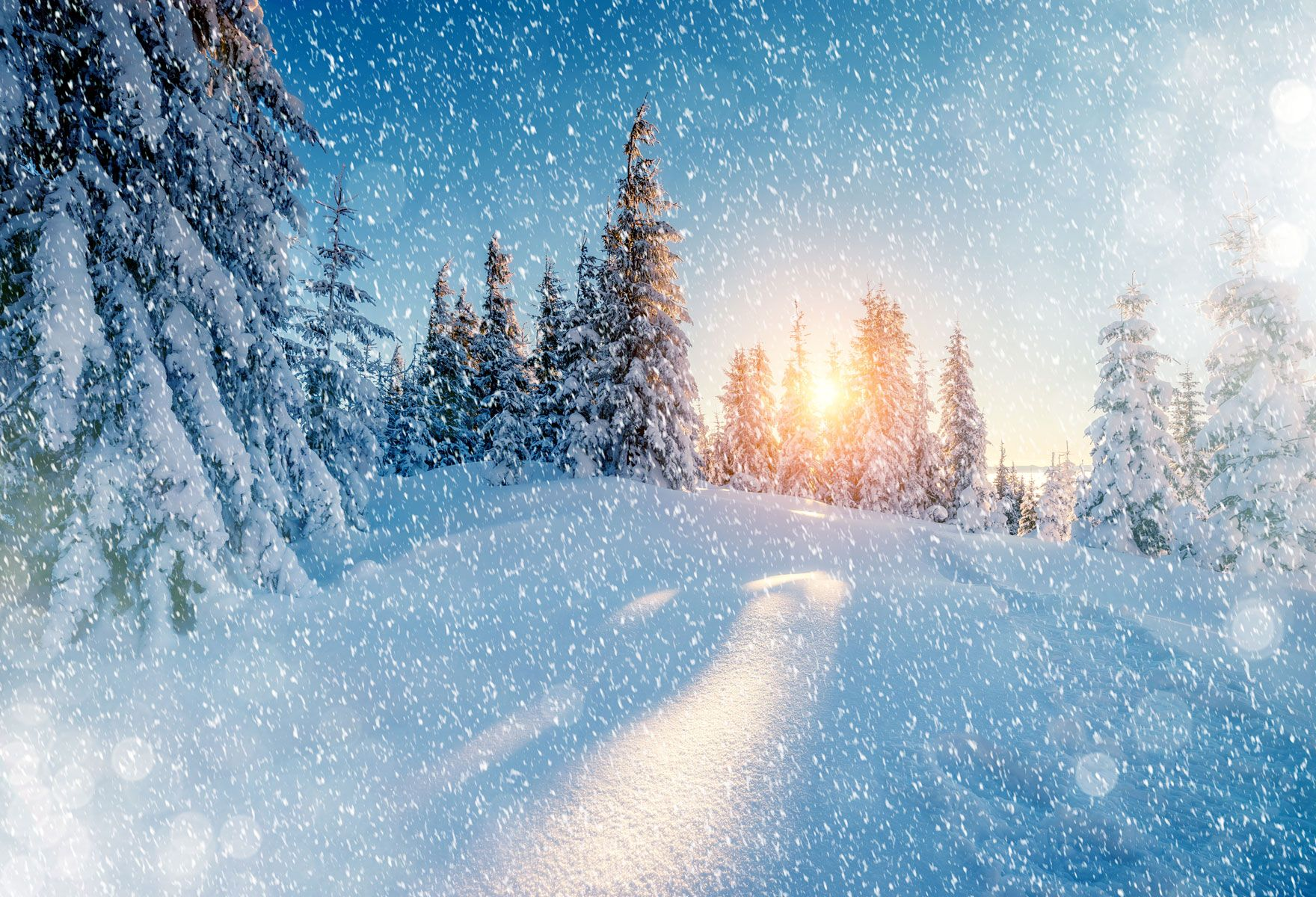 Winter Snow Forest Photography Background Art Photo Backdrop