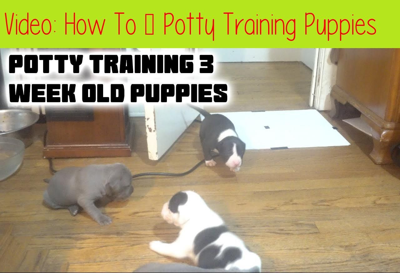 How To Potty Training Puppiesbe Sure To Watch In 4k Hello