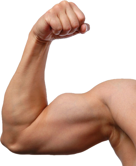 Muscle Png Image Arm Anatomy Anatomy Reference Body Reference