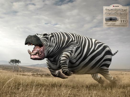 Kingston:  Hippo-Zebra