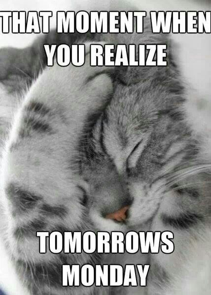 That Moment When You Realize Tomorrow S Monday Even Worse Coming Off A Weeks Vacation Cats And Kittens Cute Cats Kittens Cutest