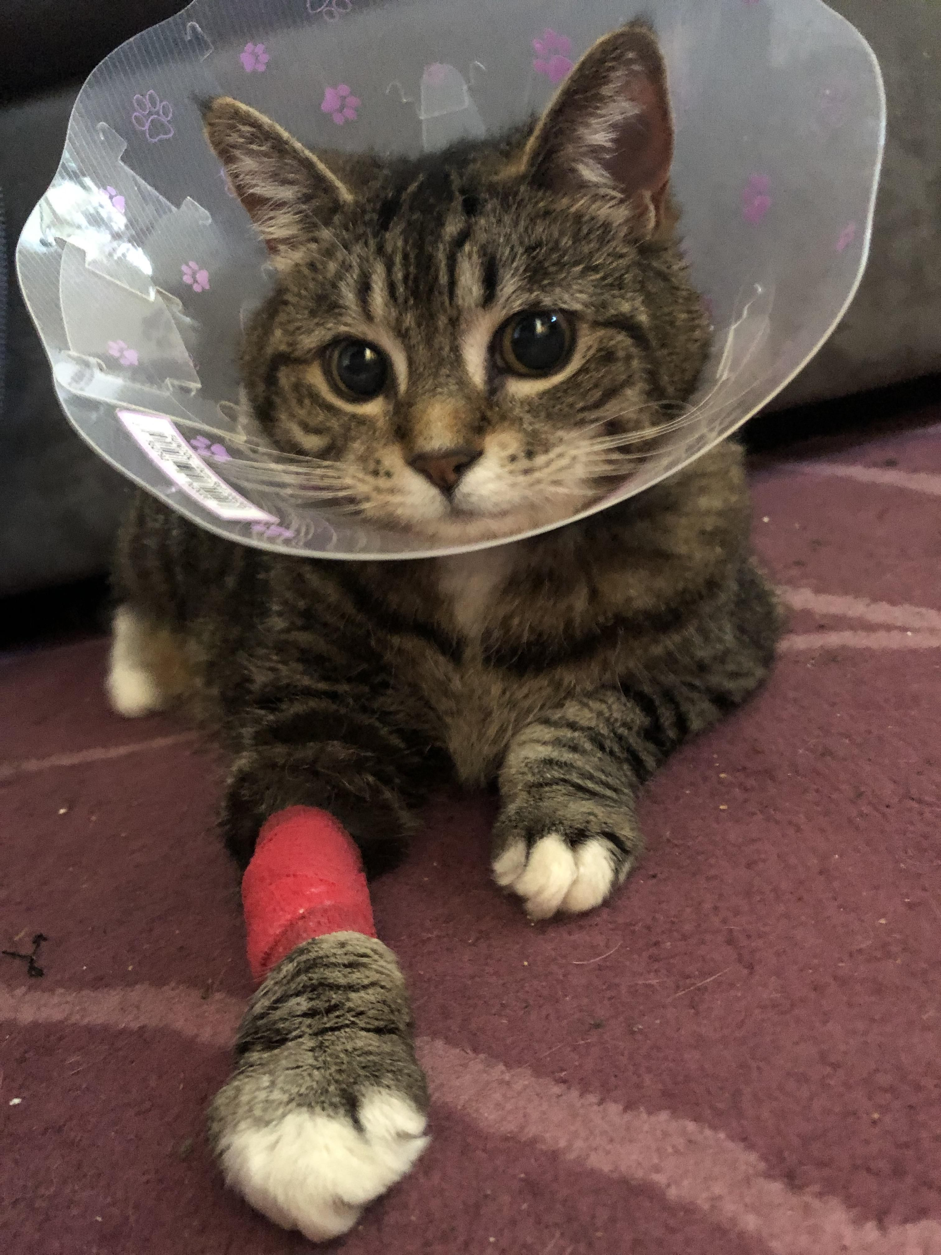 Get well soon sweetheart injuredcat cutie sweetheart