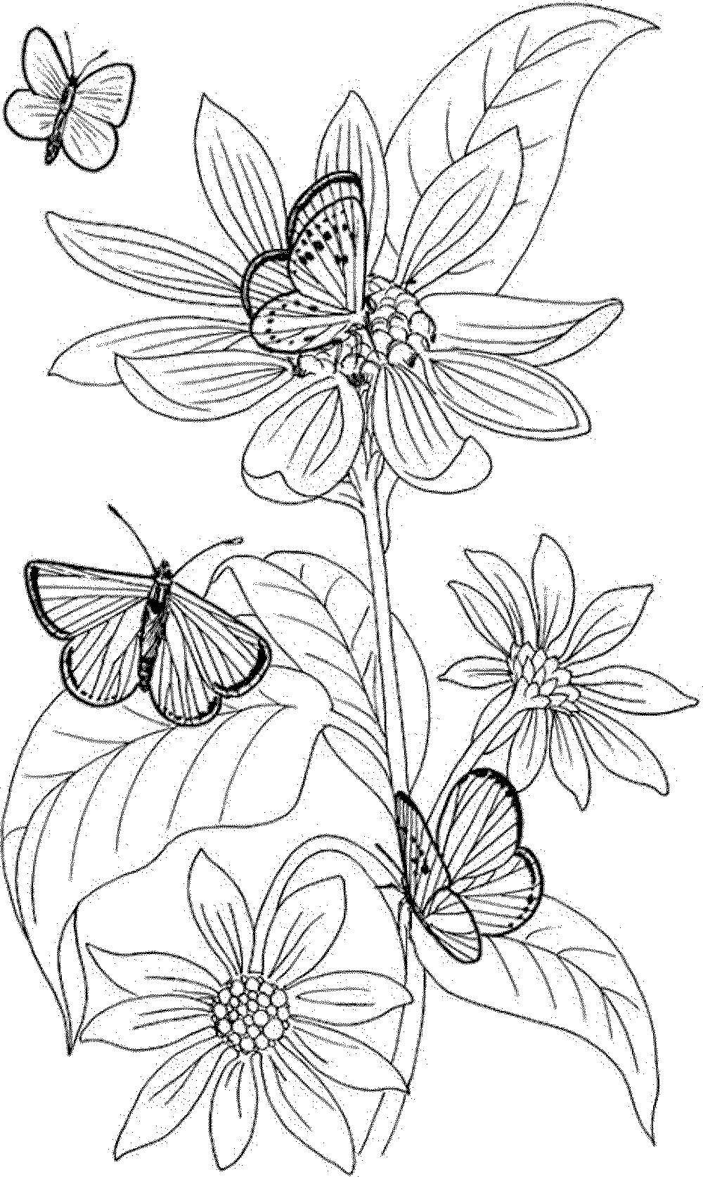flower-coloring-pages-for-adults (With images) | Butterfly ... | coloring sheets for adults flowers