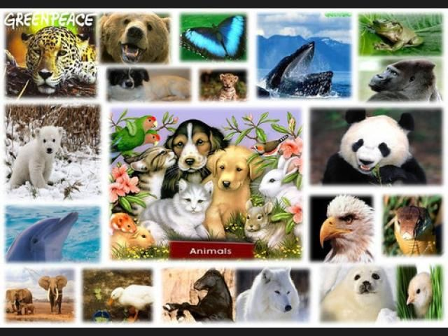 5.REINO ANIMAL: Todos los animales son multicelulares y ...