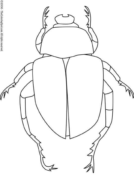 Google Image Result for http://thecoloringspot.com/wp-content/uploads/2011/05/scarab-beetle.jpg