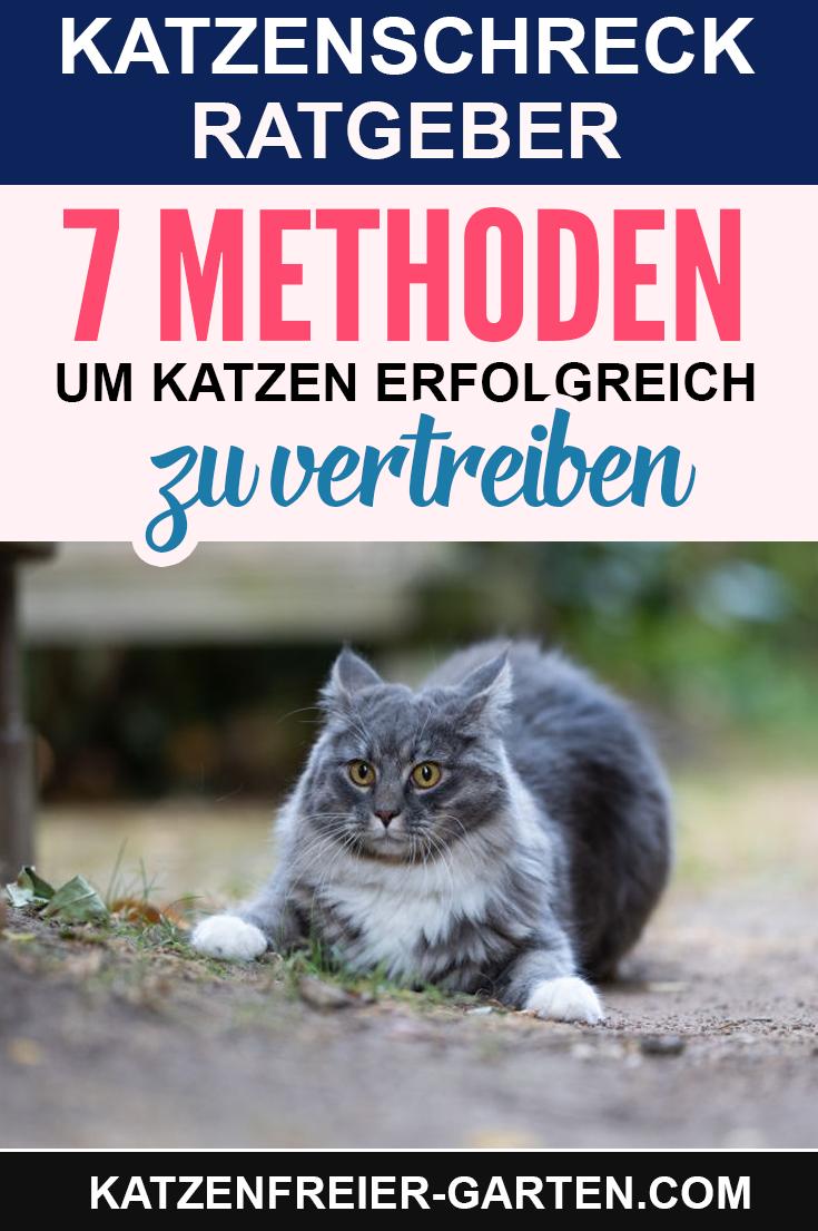 Katze Aus Dem Garten Vertreiben Katzen Vertreiben Schreck