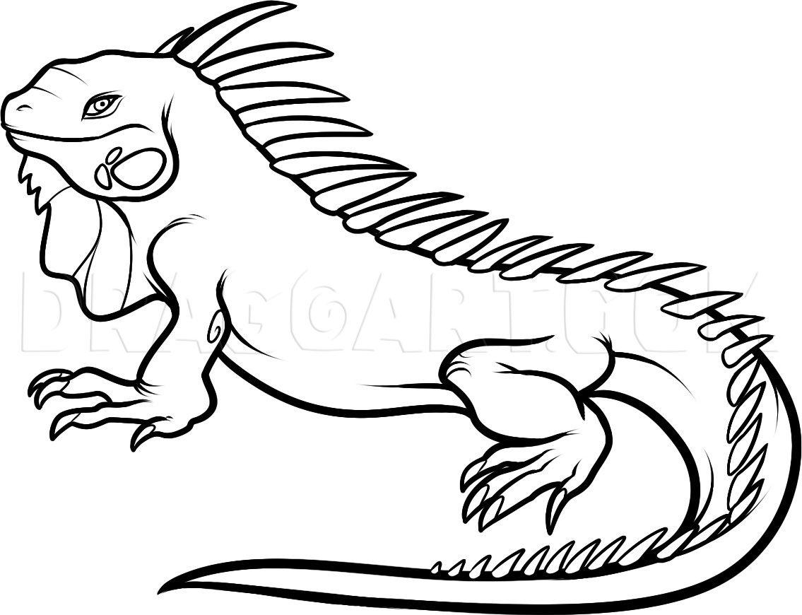 How To Draw An Iguana By Dawn