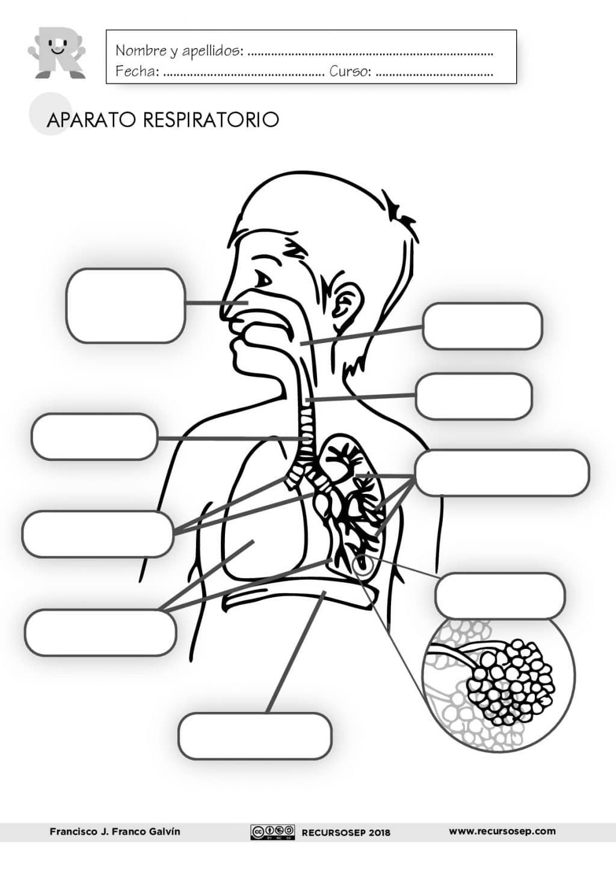 El Aparato Respiratorio Laminas Para El Aula Y Fichas Para El