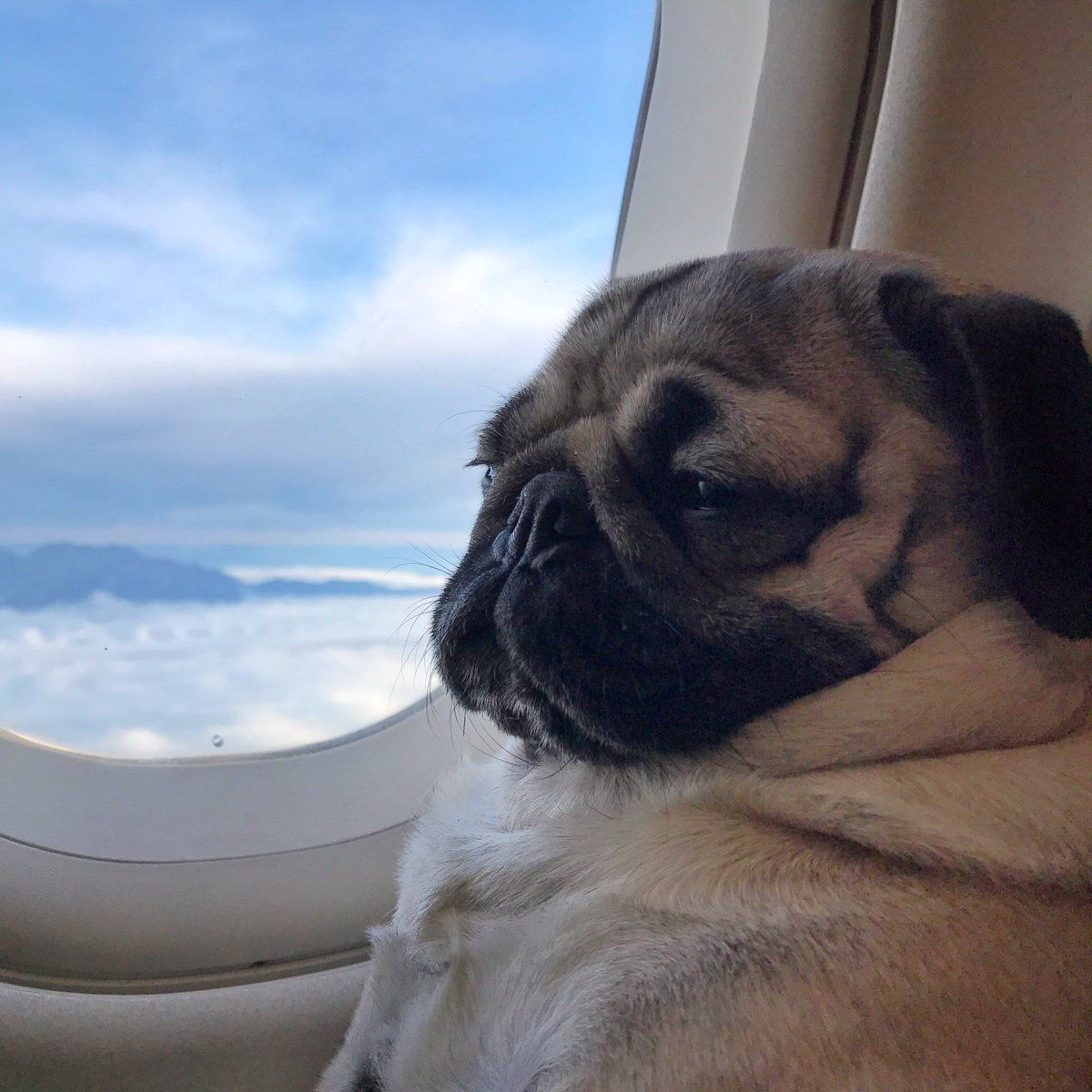 airlines that allow pets in cabin