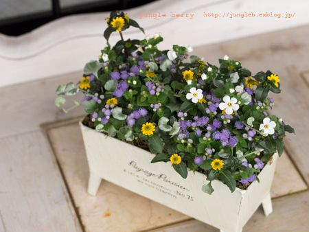 アゲラタム寄せ植え1 | gardening | Container plants、Garden、Flowers