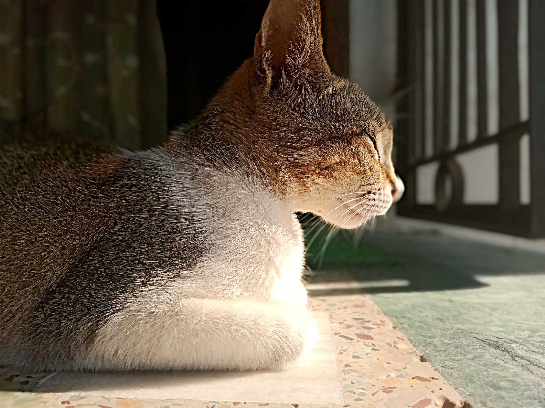 Kitten kawaiii Kawaii Kitten