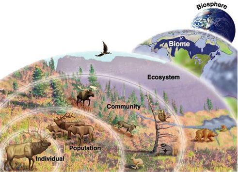 Prairie Dog Ecosystem