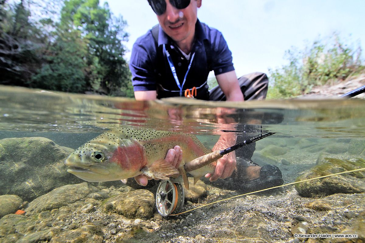Autumn Rainbow Trout Out Of Slovenia 39 S Gin Clear Waters