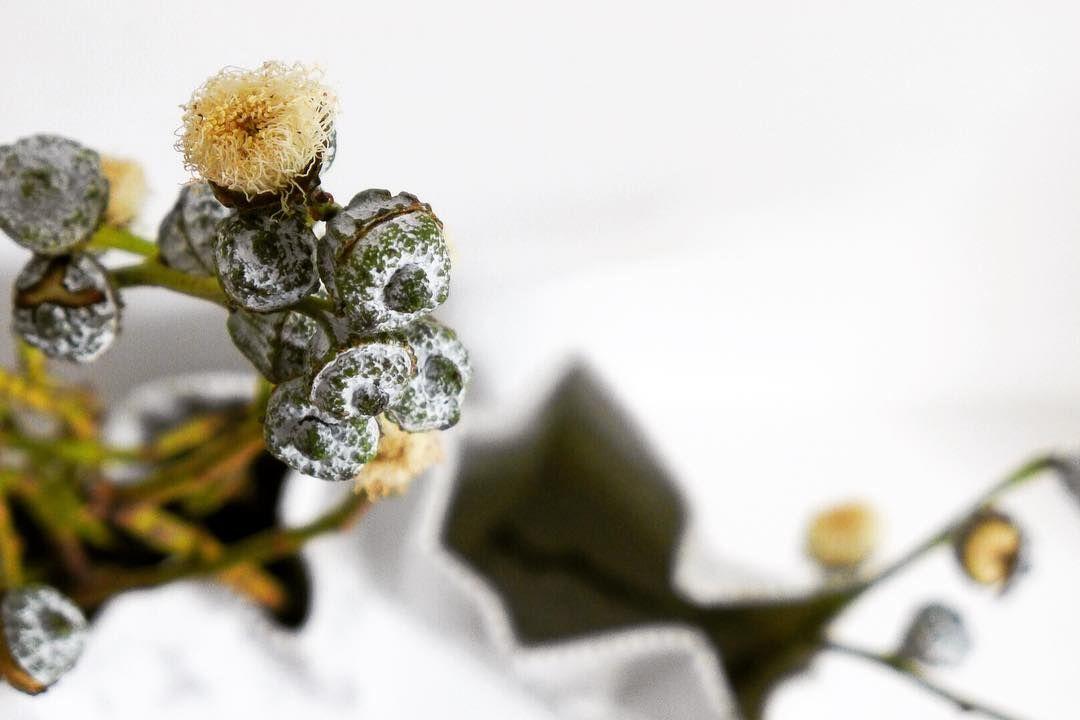 :: looking from above. Happy Monday everyone! . . . #eucalyptus #inspiredbynature #flowerlove #flashesofdelight #changingperspectives #beautifulmatters #creativityfound #thatsdarling #wortpracht