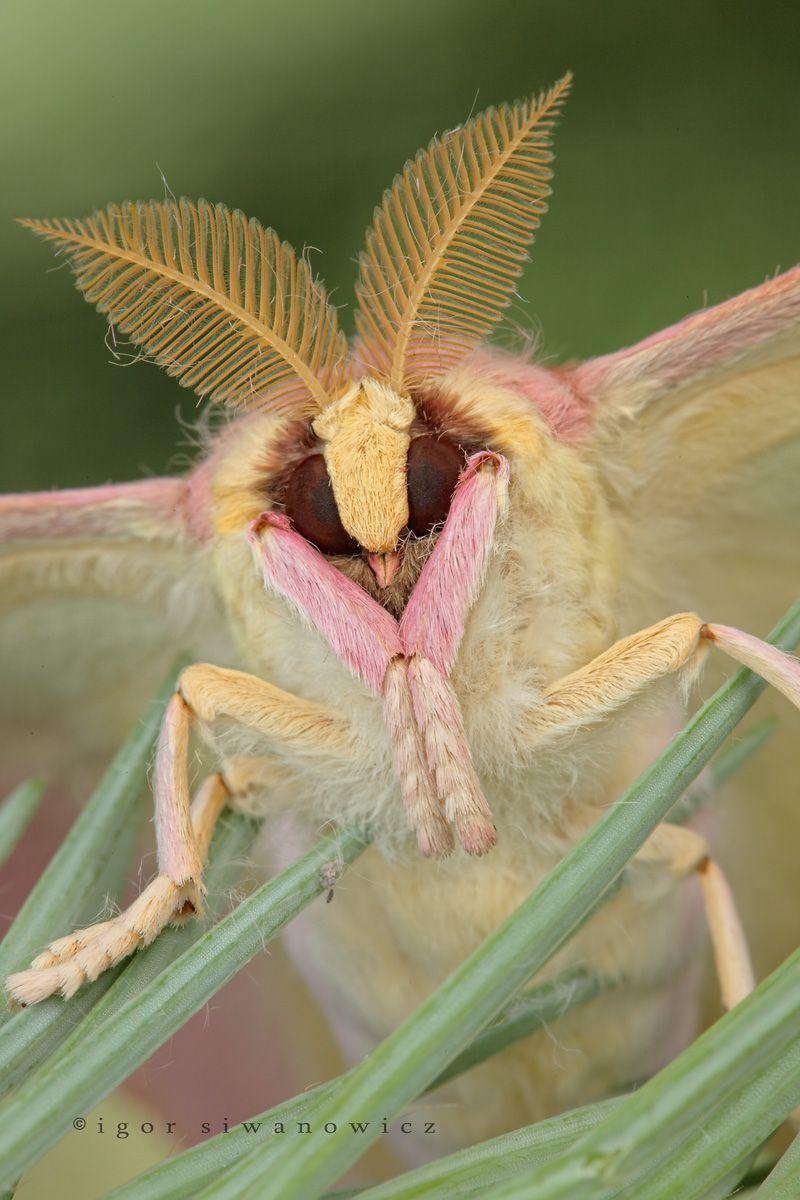 Wissenschaft Meets Kunst Der Makrokosmos Des Igor Siwanowicz Insekten Fotografie Exotische Tiere Makros