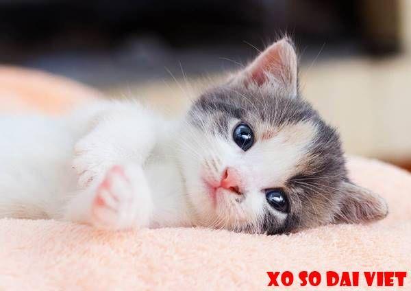 Nằm mơ thấy mèo con là điềm gì