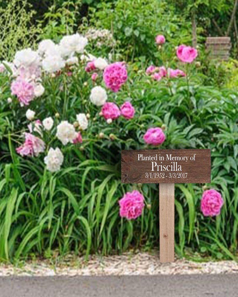 Pin by Melody Vaughan on Priscilla's Memorial Garden   In