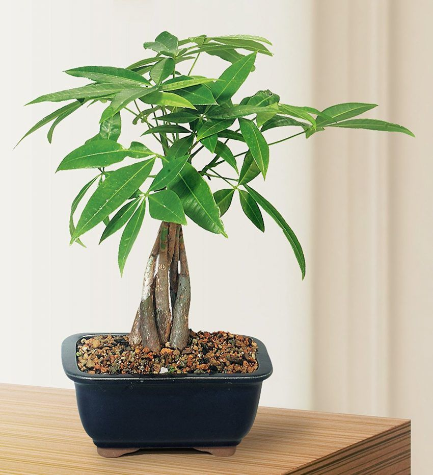 Small Plants For Office Desk Home Furniture Check More At Http